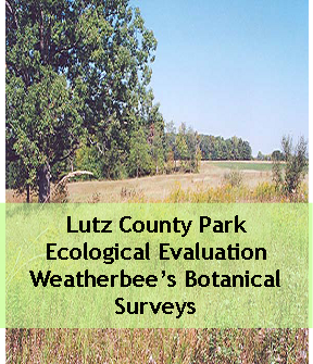 Lutz County Park Ecological Evaluation Weatherbee's Botanical Surveys